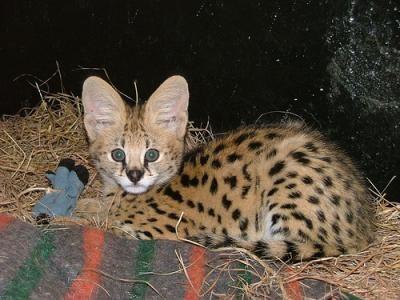 kattunger til salgs hordaland